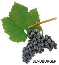 Blauburger