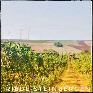 Riede Steinbergen